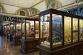 Vienna - Natural History Museum - 6208.jpg