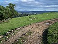View Near Hazler Hill - geograph.org.uk - 256374.jpg