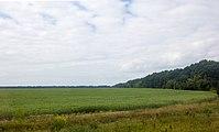 View from train window - panoramio (4).jpg