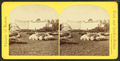 View of a greenhouse with flower beds in the foreground, by Seaver, C. (Charles).png