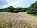 View to Holloway Bank Wood - geograph.org.uk - 1469031.jpg