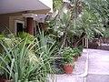 Villa Toscana garden.JPG