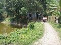 Village Chanduria - Simurali 2009-04-05 4050031.JPG