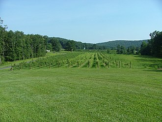 Yadkin Valley AVA - Vineyard in Swan Creek, Yadkin Valley