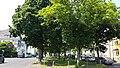 Von-Groote-Straße Grünanlage.jpg