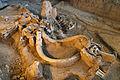 Waco mammoth site QRT.jpg