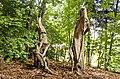 Waldmenschen Skulpturenpfad (Freiburg) jm9521.jpg