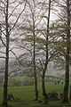 Walkers at the Bannockburn monument - geograph.org.uk - 1294899.jpg
