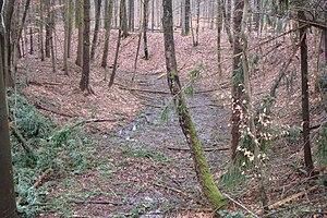 Der ehemalige Wassergraben der Röderburg