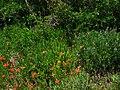 Wetherill Mesa Road, Mesa Verde National Park (4852250398).jpg