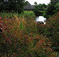 Wetlands centre, Barnes, W. London. - panoramio (1).jpg