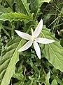 White Floeuser.jpg