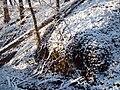 Wielkopolski Park Narodowy zimą 6.jpg