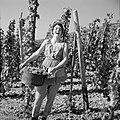 Wijnkoningin Mosella poseert met een emmer druiven in de wijngaard, Bestanddeelnr 254-4182.jpg