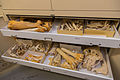 Wildlife Forensics Lab (16599131949).jpg
