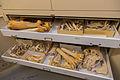 Wildlife Forensics Lab (16599131949).jpg