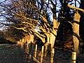 Winter sun on the Beech trees - geograph.org.uk - 663494.jpg