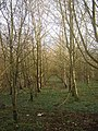 Woodland, Crick, Monmouthshire - geograph.org.uk - 353524.jpg