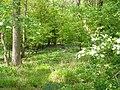 Woodland by Waterland Farm - geograph.org.uk - 1294716.jpg