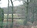 Woodland by the West Loch, near Tarbert. - geograph.org.uk - 120916.jpg
