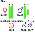 XY-Chromosomen.jpg