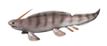 Xenacanthus NT small cropped.png