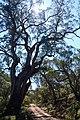 Yanununbeyan National Park, NSW.jpg