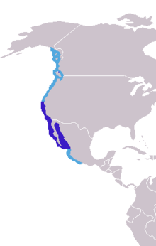 alt=Description de l'image Zalophus californianus distribution.png.