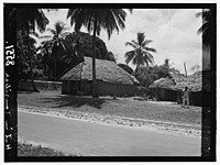 Zanzibar. Native huts among the palms LOC matpc.00399.jpg