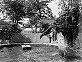 Zeeleeuwen in Artis, Bestanddeelnr 189-0457.jpg