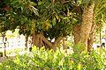 ® S.D. EL CAMPELLO A.V.U. FLORA SINGULAR - panoramio (4).jpg