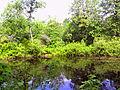 Весна 134, пруд в парке.JPG