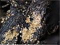 Волокна растительной ткани из раскопок Баяновского могильника, Пермский край. Век X, угорское население.jpg