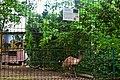 Дендропарк Ему DSC 0346.jpg