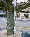 Дерево обняло столб.Ньон, Швейцария. Nyon - panoramio.jpg