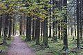 Дорожка - panoramio (243).jpg