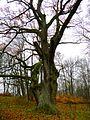 Древо, Ilzenbergas - panoramio.jpg