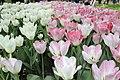 Елагин парк, фестиваль тюльпанов8.jpg