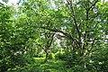 Зелень парка.jpg