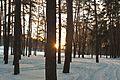 Зима в Басiвському парку 2.jpg