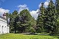 Кедры напротив южной стороны Никольской церкви в селе Шестаково Слободского района.jpg