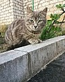 Кот, смотрящий у душу.jpg