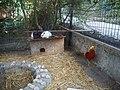 Кролики и фазаны в Ялтинском зоопарке.jpg