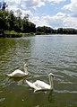 Марьино Парк Рыльский район Лебеди Фото 1.jpg