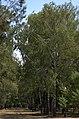 Пам'ятник «Героям Визвольної війни Українського народу 1648–1654 рр Вид 34.jpg