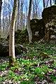 """Скелі та весняні квіти в урочищі """"Зіньків камінь"""".jpg"""