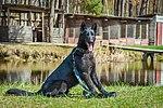 Собаки НГУ 5417 (19168521179).jpg