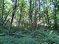 Украина, Киев - Голосеевский лес 05.jpg