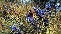 Флора і фауна Сколівських Бескид.jpg