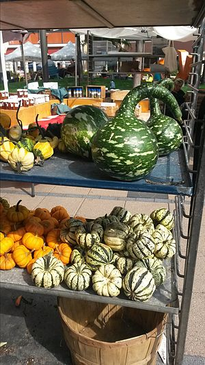 Gourd - Gourds on display at Cambridge, Massachusetts